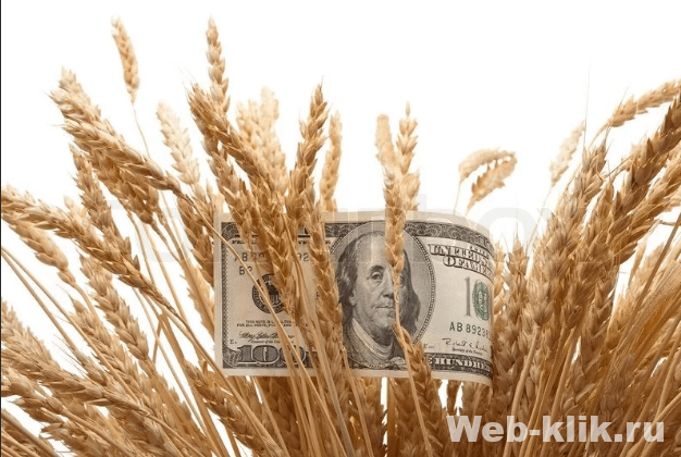 пшеница и баксы